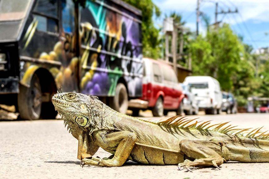 Mexiko Natur