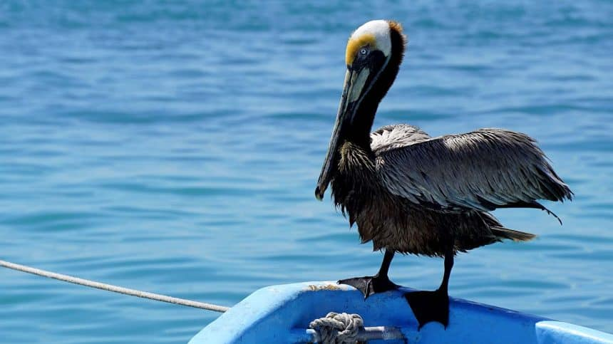Isla Mujeres Mexico - Fishing boat with pelican