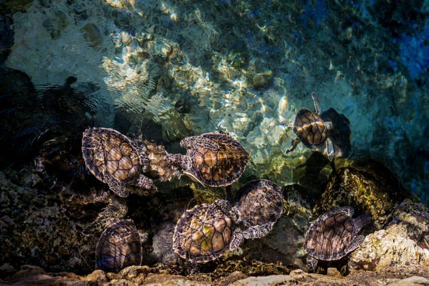 Excursions in Cancun, Quintana Roo, Mexico - Visit to a turtle farm