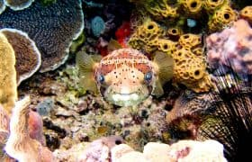 Cozumel Things to do - Scuba Diving or Snorkeling