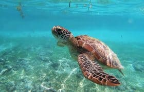 Akumal Mexico - Snorkel with seaturtles