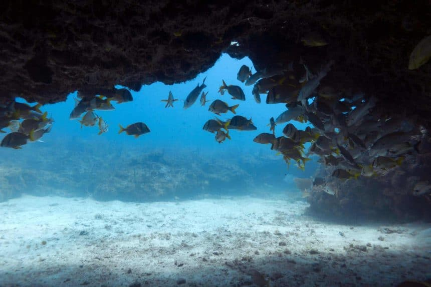 Things to do in Puerto Morelos, Mexico - Scuba diving to the shark's underwater cave