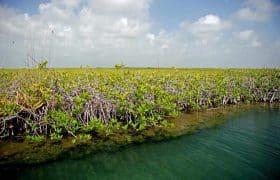 Swamp in Sian Kaan, Mexico