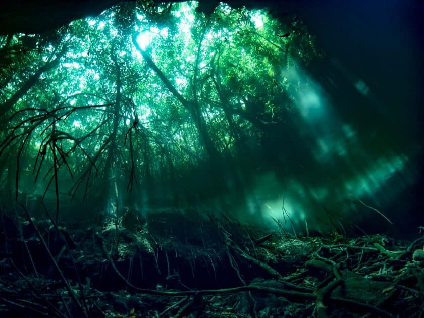 What is a cenote? Diving in the cenotes of Yucatan Peninsula, Mexico