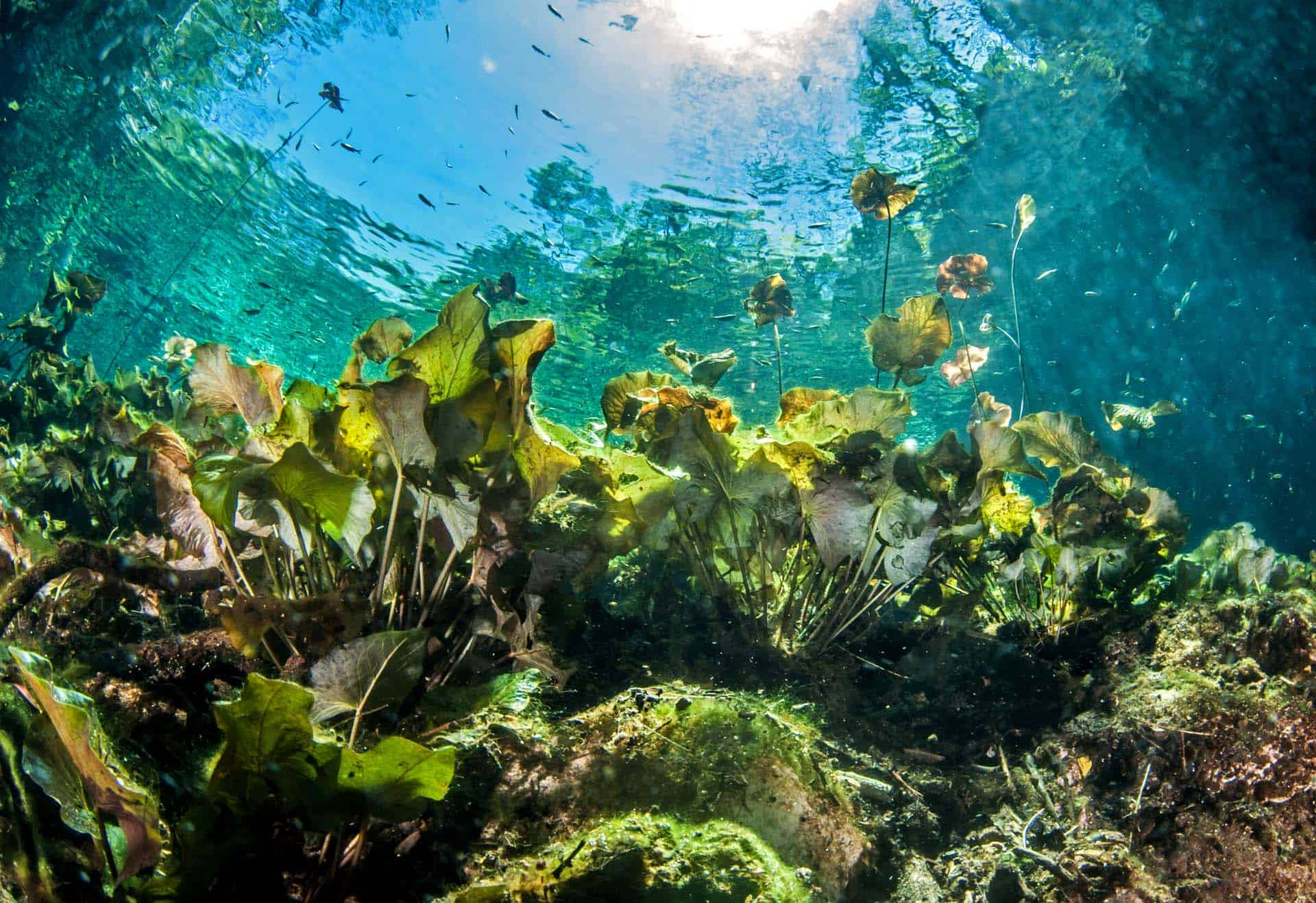 5 Beautiful Cenotes in Cancún
