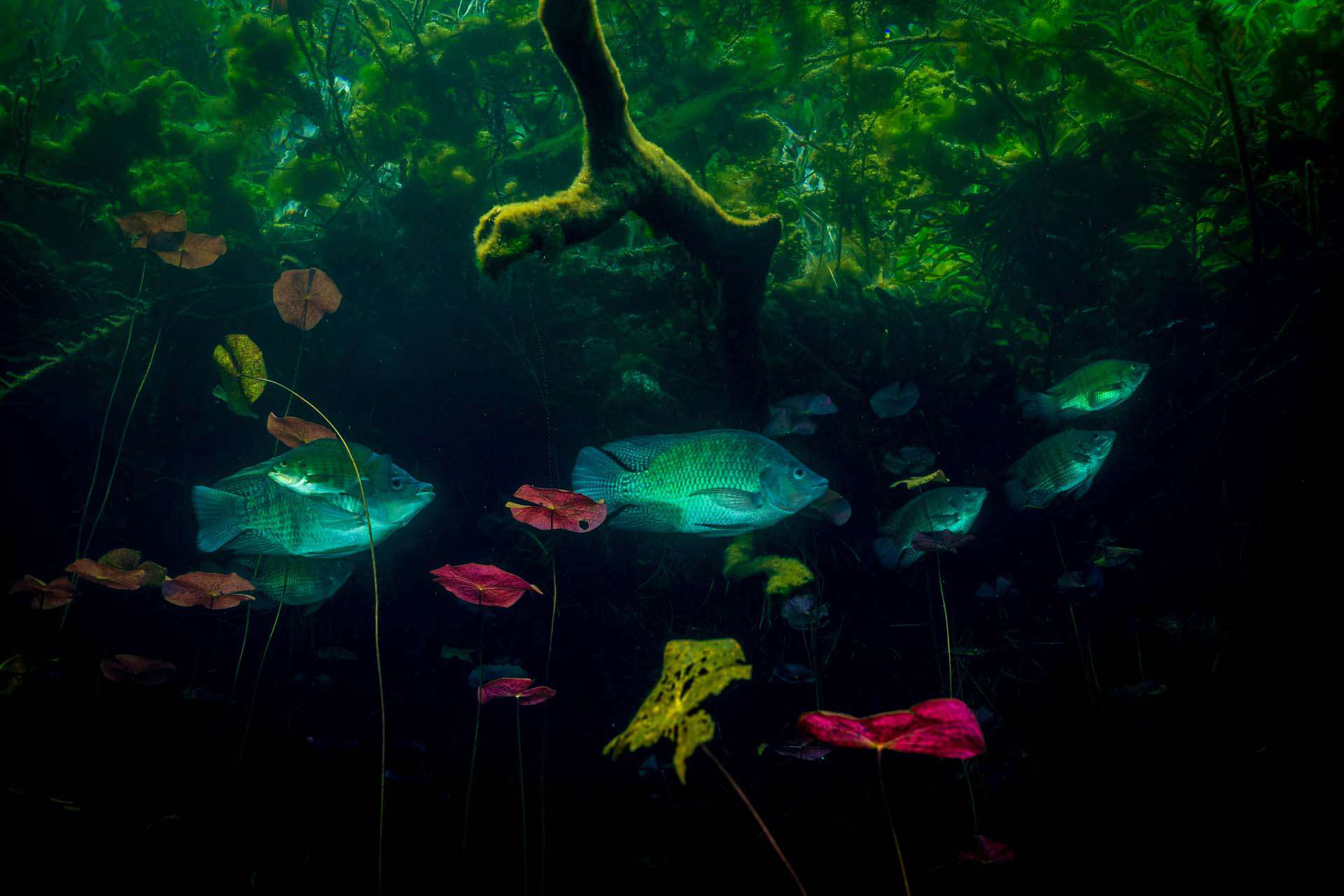 Cenotes and the Maya in ancient times