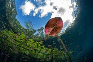 What are cenotes? How cenotes are formed